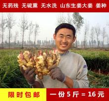 包邮 山东农家黄姜新鲜生姜种子大生姜小黄姜鲜姜 大姜生姜老姜5斤