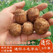 山东农家新鲜现挖蔬菜富硒毛芋头特产笨芋头小号芋艿子一份五斤