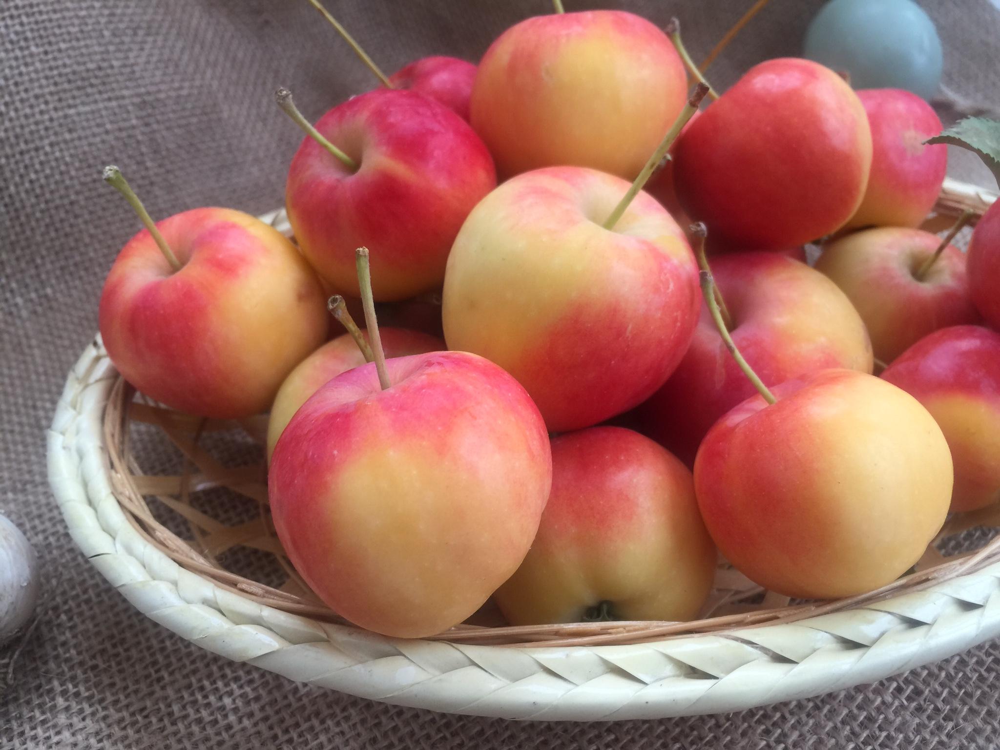 海棠果 沙果东北特产新鲜水果现摘现发孕妇酸甜脆水果一份5斤包邮