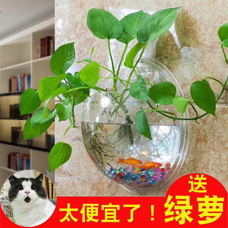 创意壁挂花盆水培吊篮吊兰花瓶花卉植物绿萝盆景绿植盆栽花器塑料