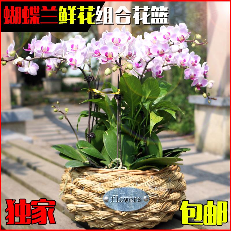 蝴蝶兰组合高档花卉绿植物盆景