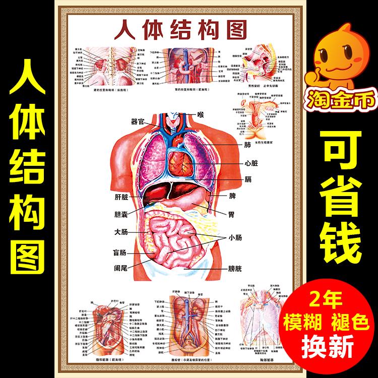 人体解剖海报 血液循环示意图 肌肉骨骼神经血管分布挂图展板