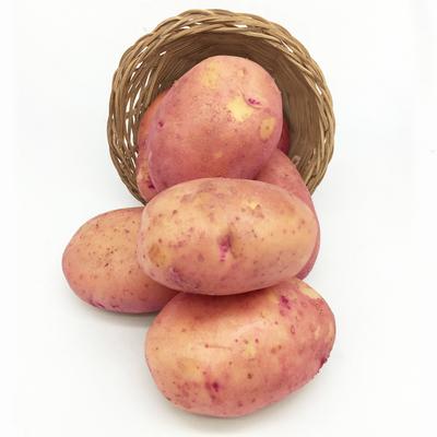 【第2份0.1元】云南红皮黄心土豆5斤非转基因现挖新鲜洋芋马铃薯