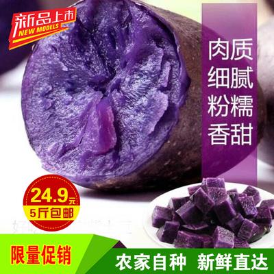 17年甘肃新鲜黑土豆 非转基因紫马铃薯 黑金刚土豆洋芋黑美人5斤