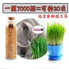 吐毛球猫薄荷猫零食猫用品调理肠胃 猫草种子土培去毛球套装 包邮