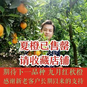 正宗秭归夏橙孕妇新鲜水果现摘农家橙子手剥榨汁脐橙带箱10斤包邮