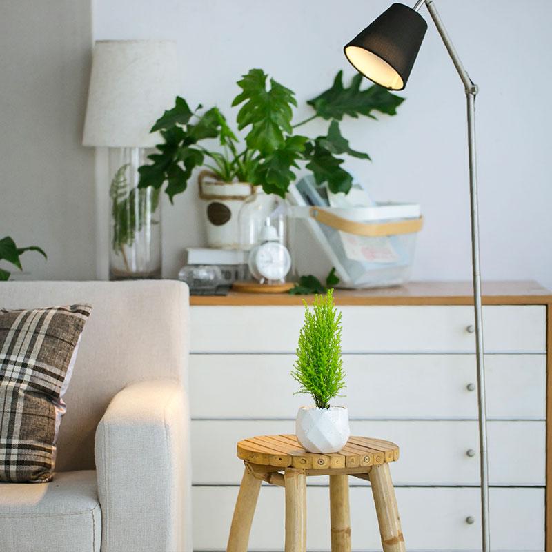 香冠柏圣诞树盆栽植物室内净化空气除甲醛办公室盆景包邮