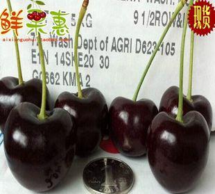 现货空运新鲜智利车厘子 特级进口水果大樱桃 2斤 全国顺丰包邮