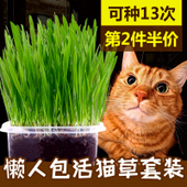 猫草种子猫薄荷粉去毛球猫草盆套装种子小麦幼猫猫咪零食洁齿免邮