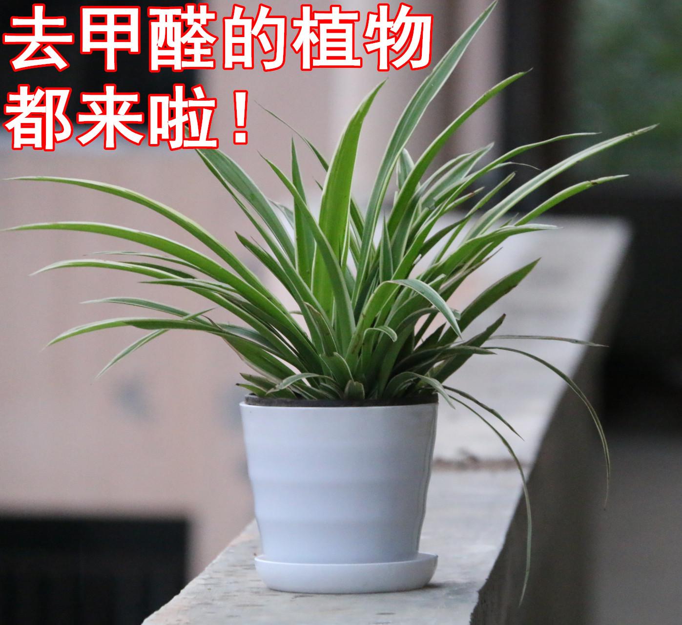素]水仙花矮壮素怎么用评测 矮壮素的副作用图