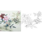 高清四尺斗方花鸟牡丹国画工笔画白描底稿临摹勾线实物打印稿400