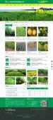 企业网站模板新绿色 苗木果林网站asp网页带后台静态可加手机源码