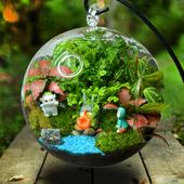 苔藓微景观生态瓶创意小盆栽迷你植物龙猫玻璃盆景花可爱diy礼物