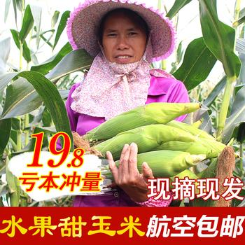 【现摘现发】横县甜玉米7个 可生吃水果玉米新鲜苞谷生玉米棒包邮