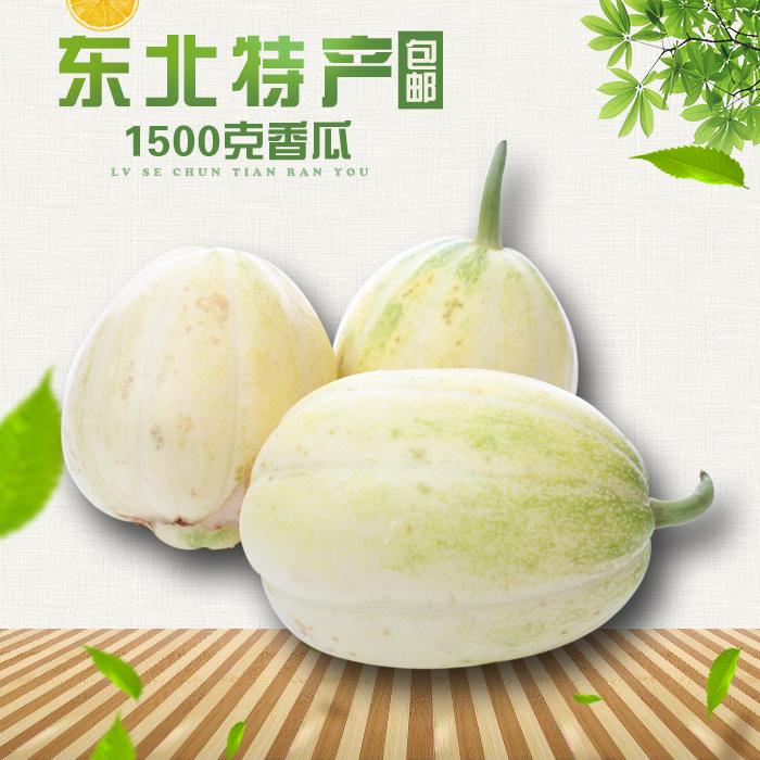 东北 水果 试吃特价特产新鲜甜香瓜东北香瓜老式白糖罐1500g包邮