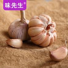 蒜种蔬菜干蒜头5斤 包邮 低价 味先生2017年山东金乡新鲜紫皮大蒜头