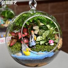 旺林园艺创意苔藓微景观生态瓶玻璃吊球绿植送男生女朋友生日礼物