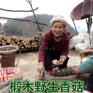 新货野生椴木香菇干货500g农家自产蘑菇冬菇含花菇胜过东北小香茹