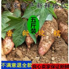 现挖新鲜番薯农家产新鲜地瓜红 蒙山红皮红心地瓜 天天特价