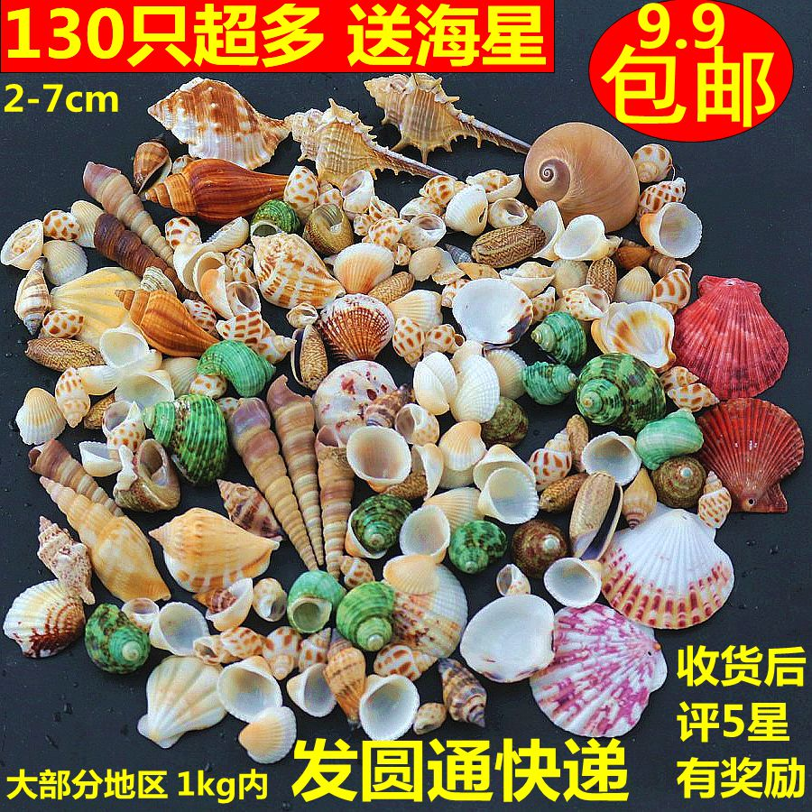 海螺贝壳海星 地台鱼缸造景装饰摆件寄居蟹打孔儿童