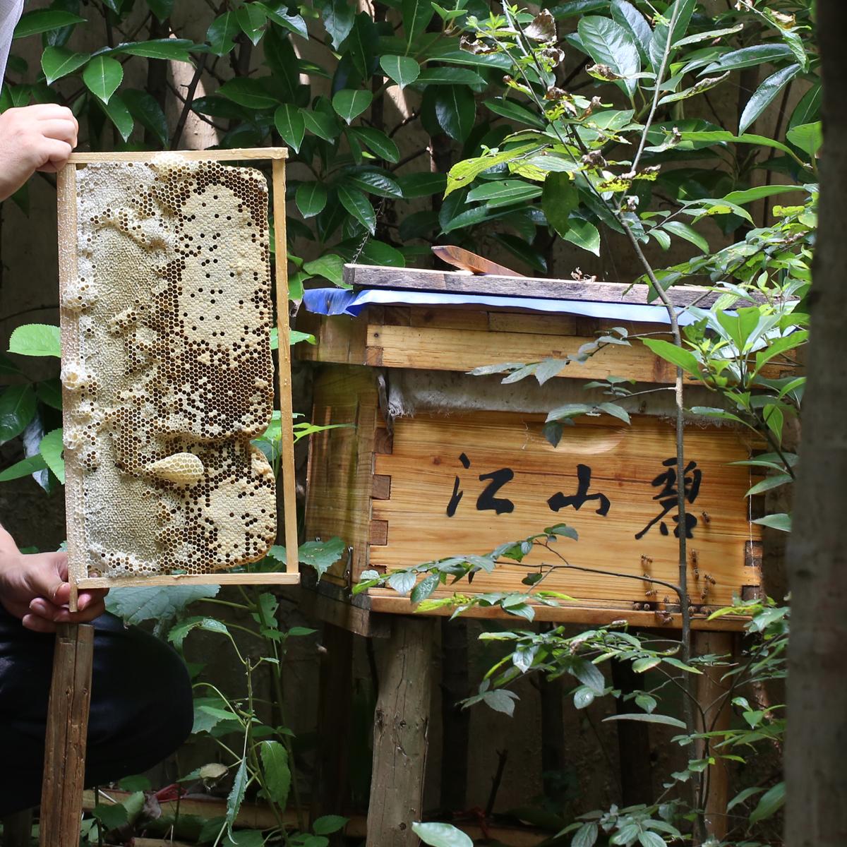 查看淘宝中蜂蜜蜂病害中华乌龟野蜂含土蜂带脾带箱无蜂王蜂场珍珠小蜂群会叫吗图片