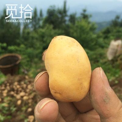 恩施农家自种土豆新鲜富硒小土豆马铃薯黄洋芋5斤